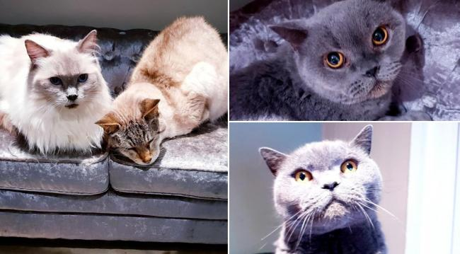 The owner of the cats sadly died. The beautiful animals are looking for a new loving home