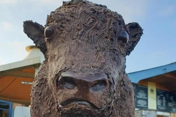 Conwy chocolatiers Baravelli's have created a bespoke chocolate bison on behalf of Corwen's Rhug Estate
