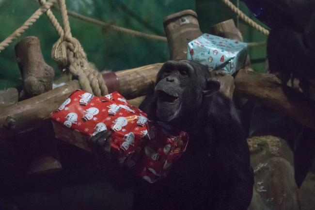 Visitors can take advantage of half-price entry this festive season. Picture: Welsh Mountain Zoo